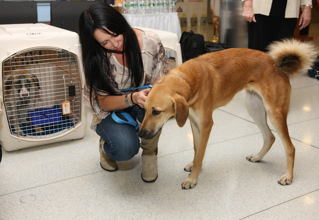 American Airlines, American Dog Resue, and PRAI Support the Work