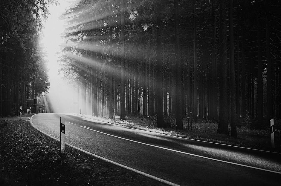 Bright Light In Dark Woods 2