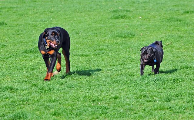 Friendship Dog Park