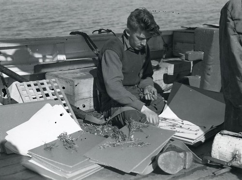 No. 40. Crew member preparing plant specimens for Smithsonian, off the east coast of Greenland, 1939 | by Smithsonian Institution