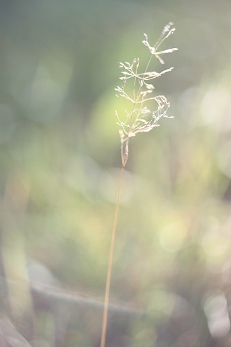Grass | by moversti