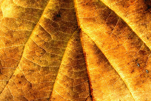 Oak macro | by nondesigner59