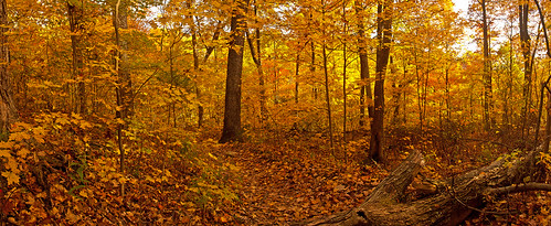West Pinnacle forest trail. Berea , KY | by Ulrich Burkhalter
