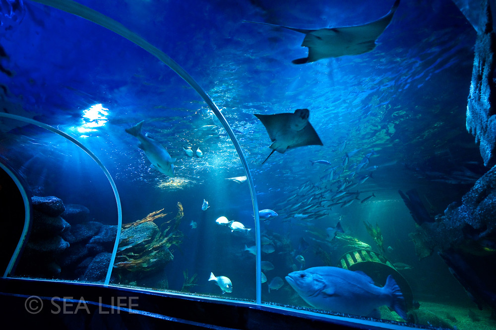 aquadom sea life berlin events sea life flickr. Black Bedroom Furniture Sets. Home Design Ideas