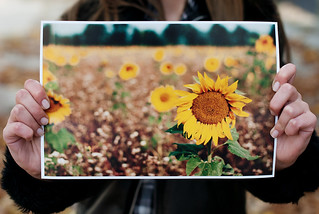 It's a sunflower 'give away' time. | by rennes_i