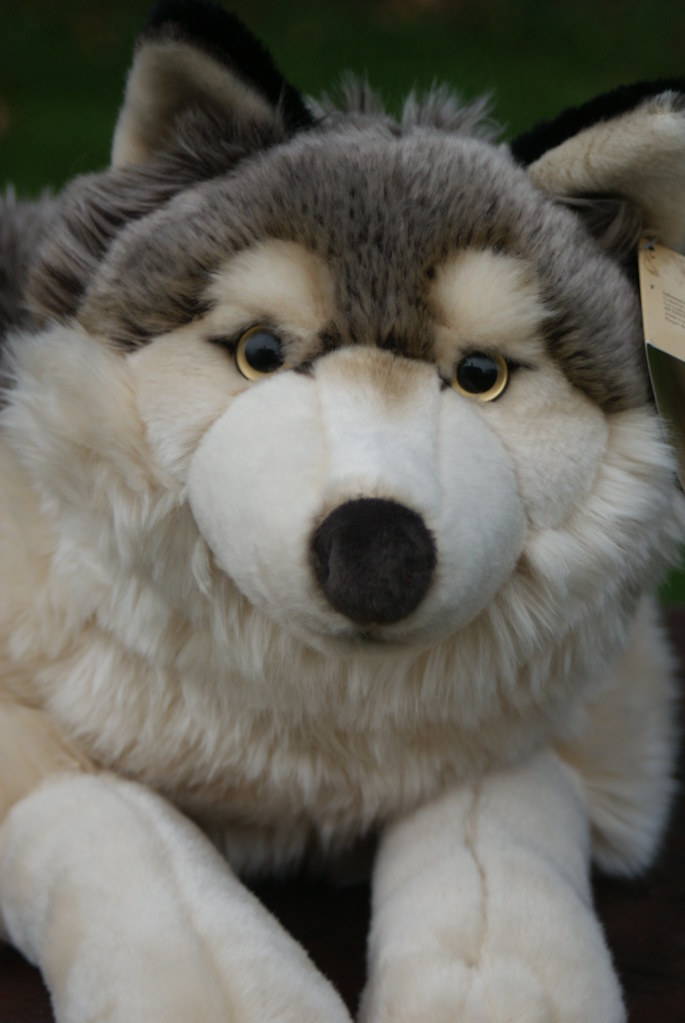 Playkids Wolf From France Stunning Quality Plush