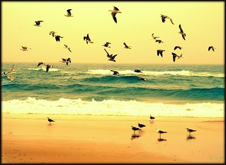 Seagulls on the beach | by gilxxl