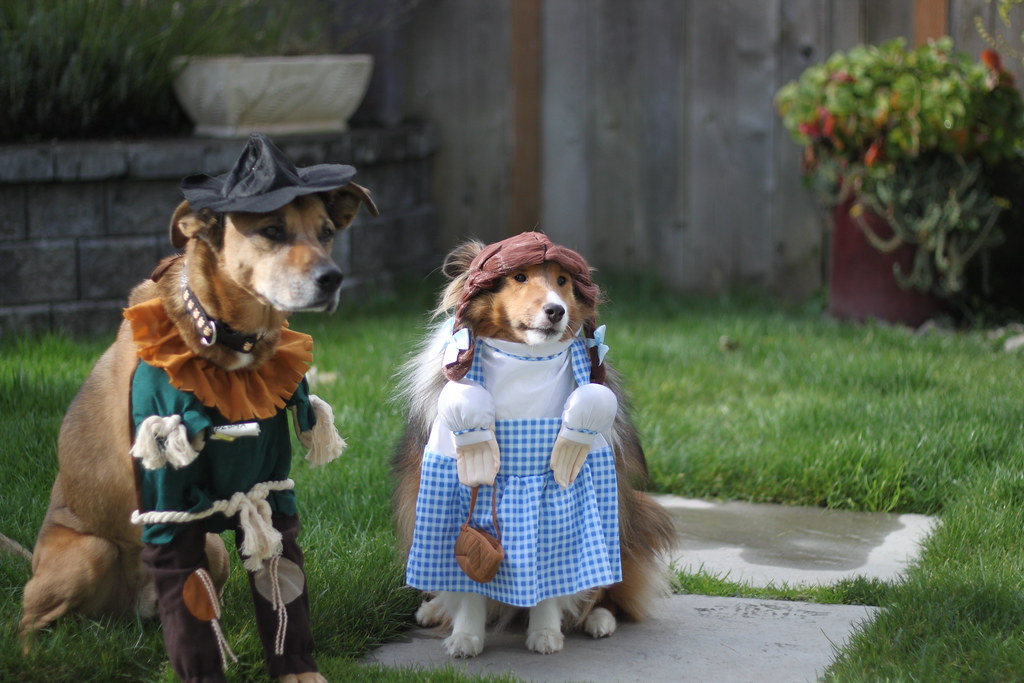Wizard Of Oz Dog Edition Dorothy And The Scarecrow