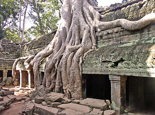 Overgrown Ta Phrom | by James Waghorn