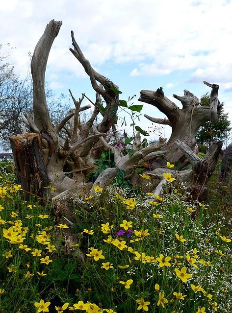 Driftwood sculpture in flowers explore lori l stalteri Driftwood sculptures for garden