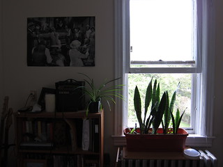 20111010 bedroom scene with spider plant and mother-in-law's tongue | by schizoform
