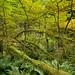 Hoh Rainforest - Olympic National Park, Washington