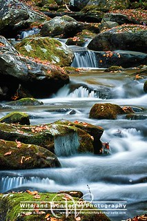 Smoky Mountains Beauty | by KathyESmith