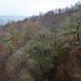 181111-lichen-oaks