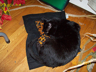 Tom enjoys his Halloween gift, a Pootie Pad! | by Pootie Pads