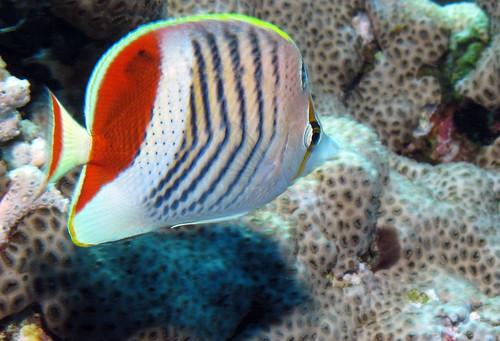 The Crown Reef Myrtle Beach Reviews