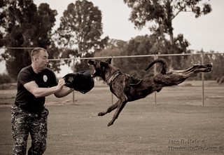 Police Dog, Super-Dog, K-9/MWD | by thevisualeffect.com (JD Malave)