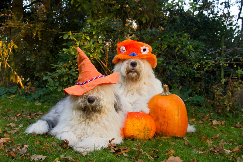 Image result for happy autumn weekend