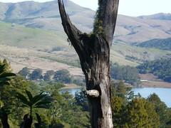 Osprey Perch by Walker Livingston