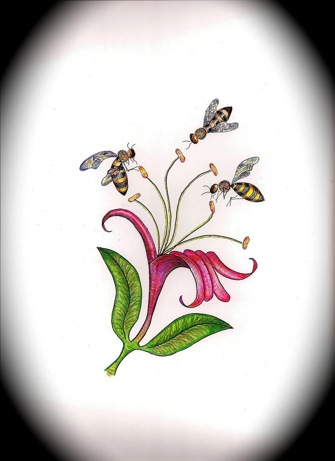Hummingbird And Honeysuckle Tattoo Honeysuckle ta.