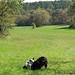 Mole Patrol on the autumn trail 2