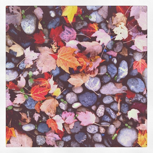 Autumn Colours Week | by poppytalk