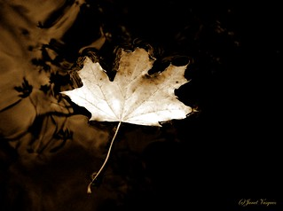 Solitary Leaf | by picture/pro