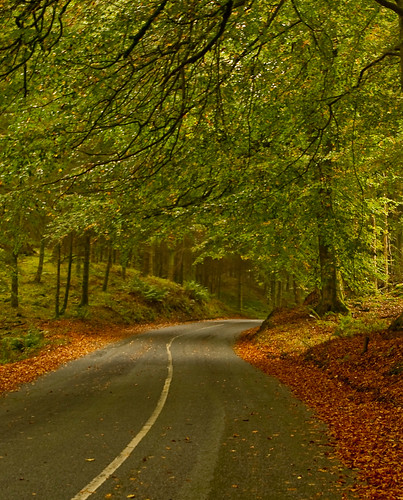 Lake District - The autumn sunshine  floods a silent country road. | by Harvey Smith