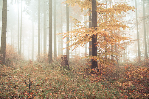 foggy forest party 1 | by STEFFEN EGLY