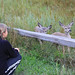 Little girl watching closely to baby Californian deer