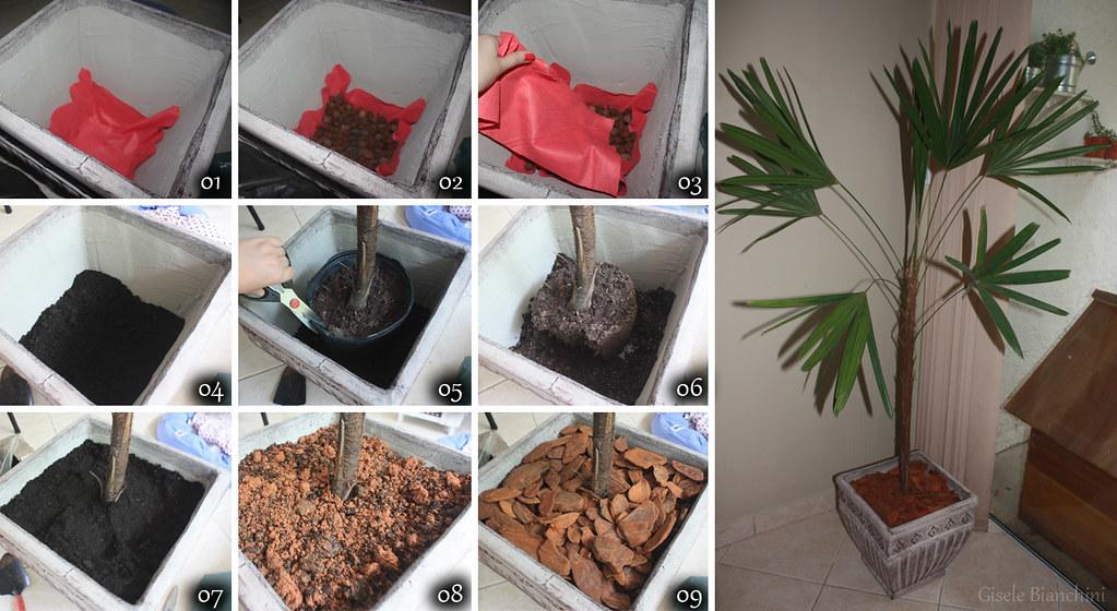 decoracao de interiores blumenau:Palmeira-ráfis (Raphis excelsa)