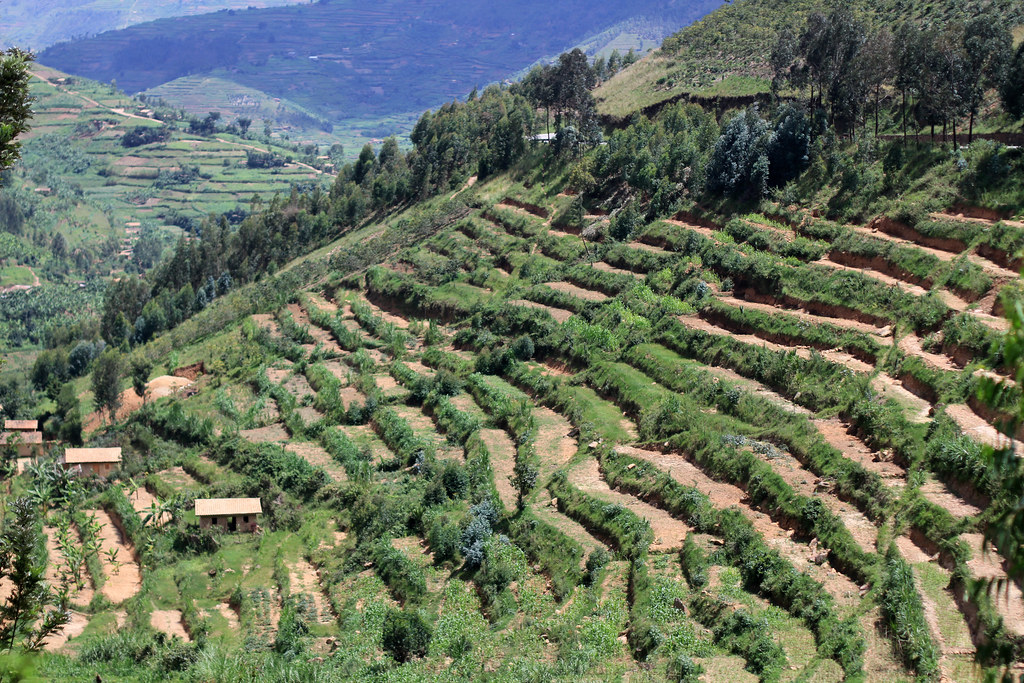 Terraced hillside i highly recommend reading this for Terrace cultivation