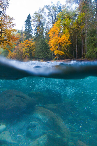 Split Underwater and Above Water View of the North Fork Skokomish River | by Lee Rentz