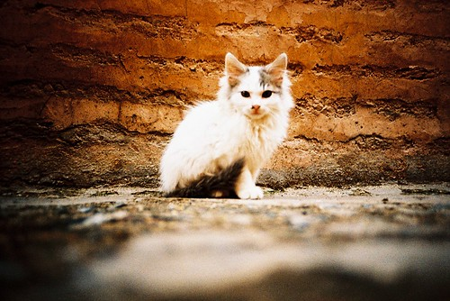 Stray kitten | by m+b