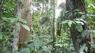 Flora and Fauna of the Borneo Rainforest | by Rainforest Action Network