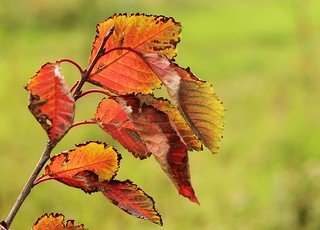 Colourful leaves | by mennomenno.