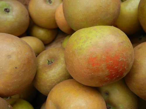 Ashmead's Kernel Apples | by orchidgalore