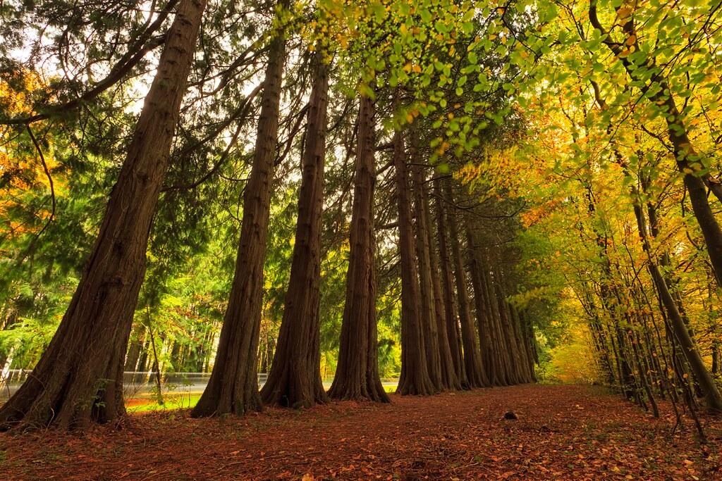 avondale forest park entrance www fotos ie no banners pl flickr