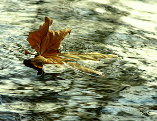 Autumn afloat... | by SteveJM2009