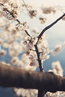 Early Blossoms | by Brian Oh