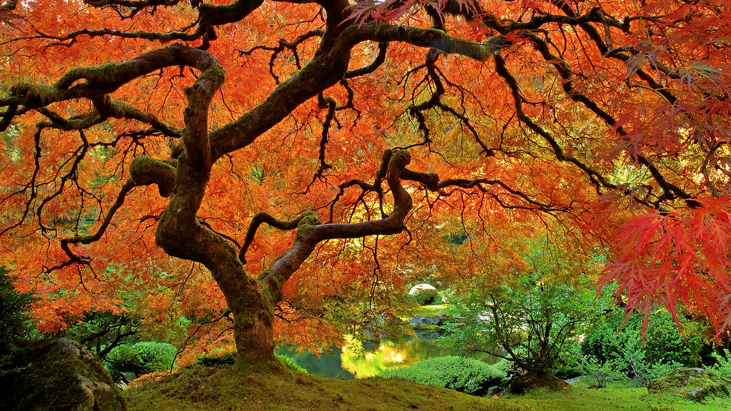 Fall colors portland japanese garden 3 fall colors at for Japanese garden colors