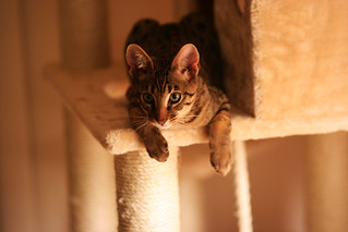 New cat tree: conquered | by itselea
