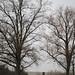 Trees 33504