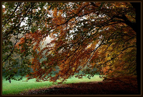 autumn....on explore | by berber hoving