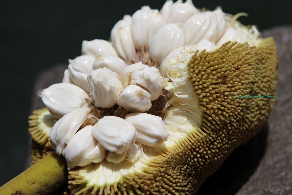 Marang The Marang Artocarpus Odoratissimus Also