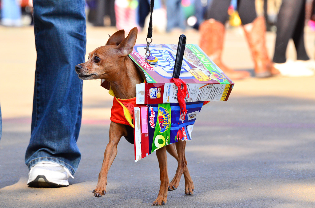 Carl Schurz Park Halloween Dog Parade