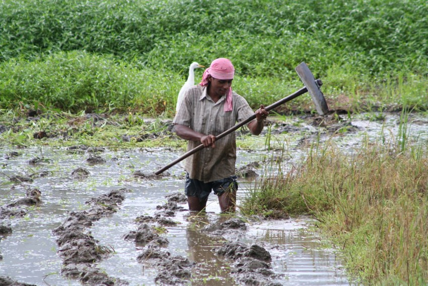 studying modern agriculture in sri lanka Agriculture traditional pest control practices in sri lanka  i conducted a study  with 30 farmers from the badulla and hambantota districts  what younger  agriculturalists call modern scientific knowledge we must reverse.