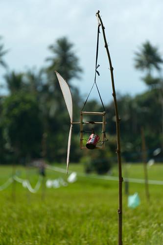 La balingbaling est utilis pour faire peur aux oiseaux d - Faire peur aux oiseaux jardin ...