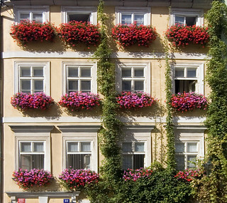 Prague Window Boxes | by Patrick Costello