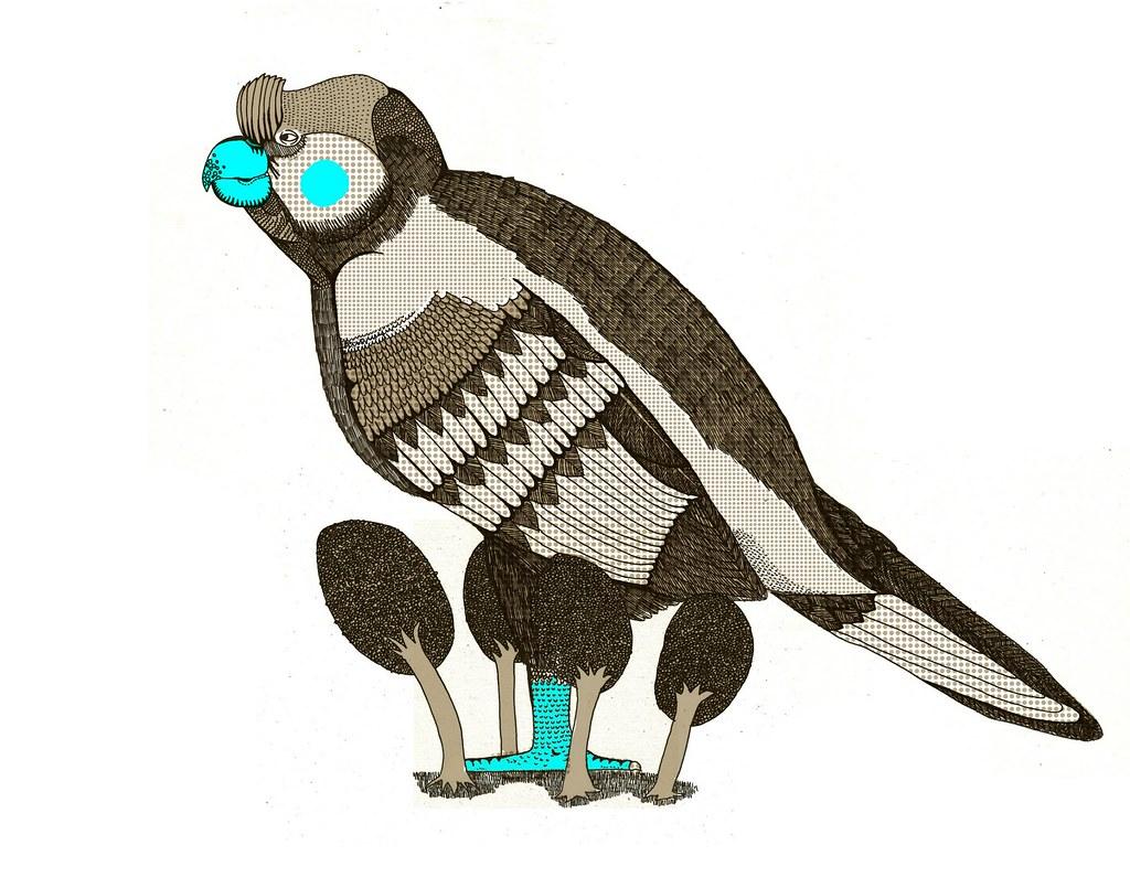 Broad Billed Parrot The Broad Billed Parrot